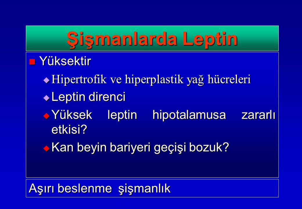 Yüksektir Yüksektir  Hipertrofik ve hiperplastik yağ hücreleri  Leptin direnci  Yüksek leptin hipotalamusa zararlı etkisi?  Kan beyin bariyeri geç