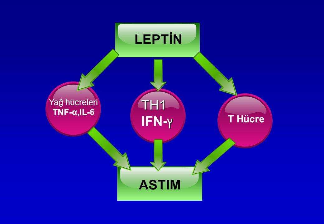 LEPTİN Yağ hücreleri TNF-α,IL-6 TH1 ץ IFN-ץ T Hücre ASTIM