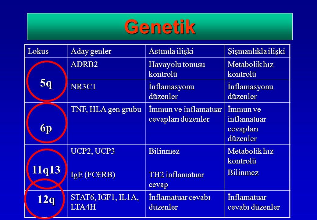 GenetikLokus Aday genler Astımla ilişki Şişmanlıkla ilişki 5qADRB2 Havayolu tonusu kontrolü Metabolik hız kontrolü NR3C1 İnflamasyonu düzenler 6p TNF, HLA gen grubu İmmun ve inflamatuar cevapları düzenler 11q13 UCP2, UCP3 IgE (FC€RB) Bilinmez TH2 inflamatuar cevap Metabolik hız kontrolü Bilinmez 12q STAT6, IGF1, IL1A, LTA4H İnflamatuar cevabı düzenler
