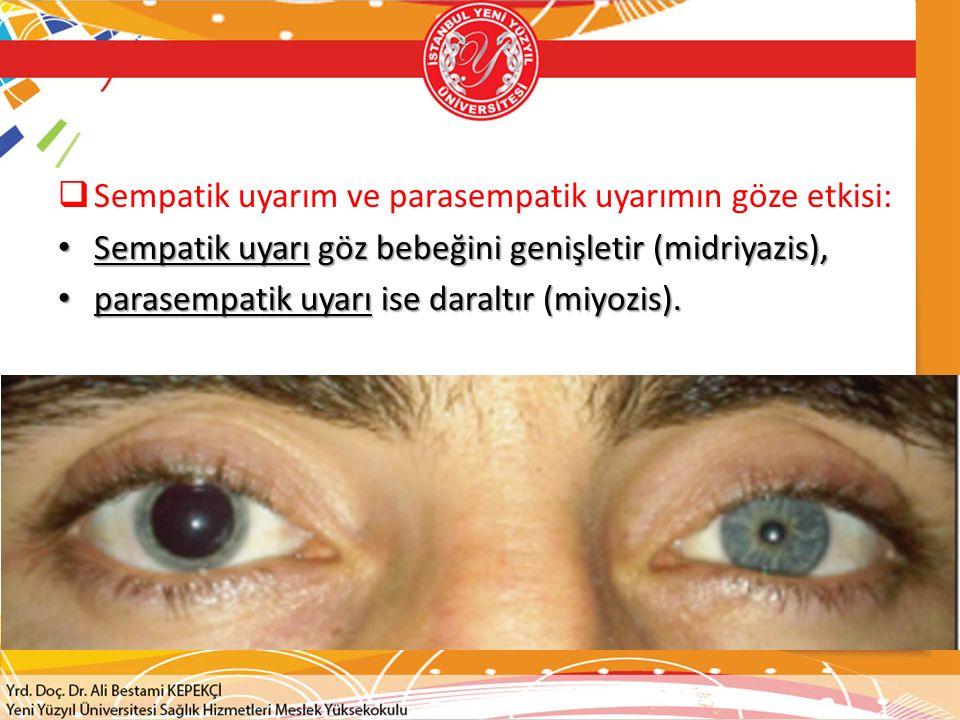 Sempatik uyarım ve parasempatik uyarımın göze etkisi: Sempatik uyarı göz bebeğini genişletir (midriyazis), Sempatik uyarı göz bebeğini genişletir (midriyazis), parasempatik uyarı ise daraltır (miyozis).