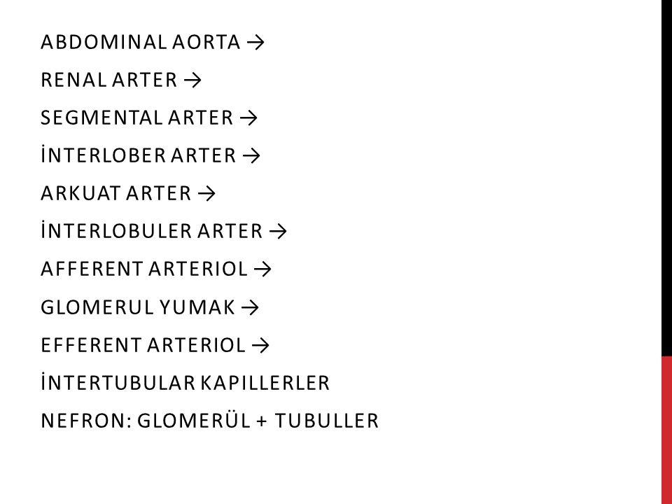 ABDOMINAL AORTA → RENAL ARTER → SEGMENTAL ARTER → İNTERLOBER ARTER → ARKUAT ARTER → İNTERLOBULER ARTER → AFFERENT ARTERIOL → GLOMERUL YUMAK → EFFERENT ARTERIOL → İNTERTUBULAR KAPILLERLER NEFRON: GLOMERÜL + TUBULLER