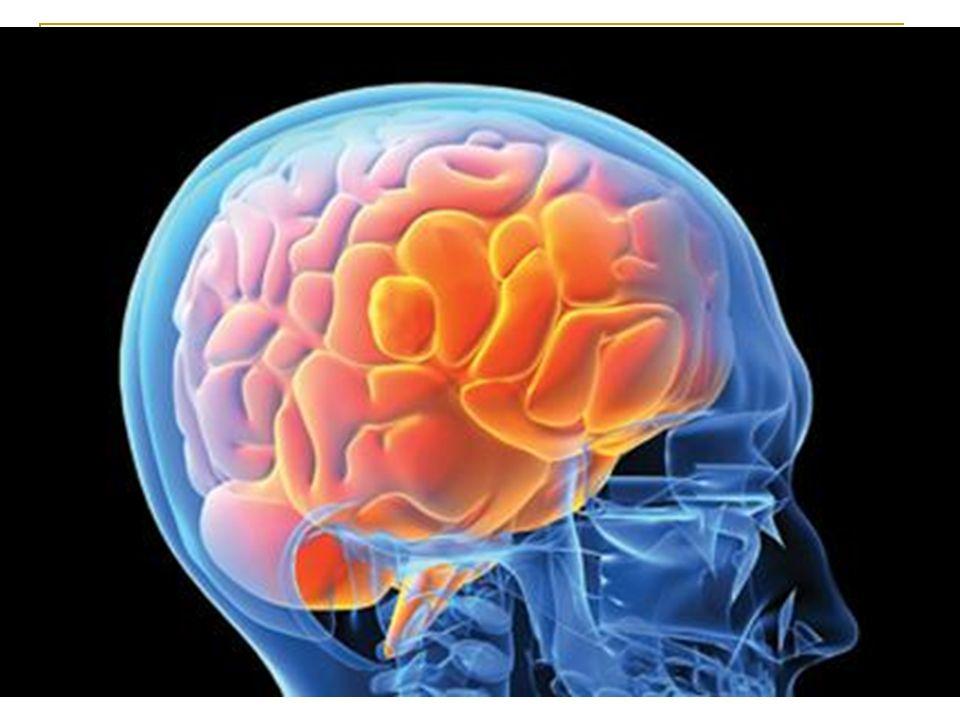 Hayati organlarımızdan olan beyin, fiziksel olarak korunaklı bir yapıya sahiptir.