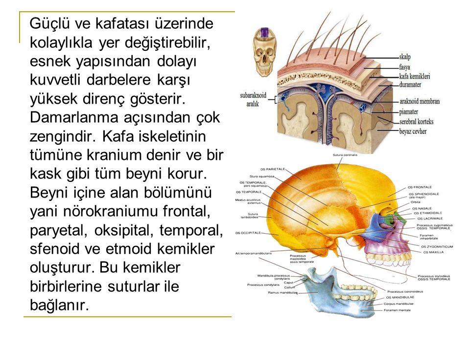 Kafatası içerisinde kısmen serbest ve BOS içinde yüzer halde bulunan beyin, hareket hızının ani olarak değişmesi ile kafatasının iç yüzeyine çarpar.