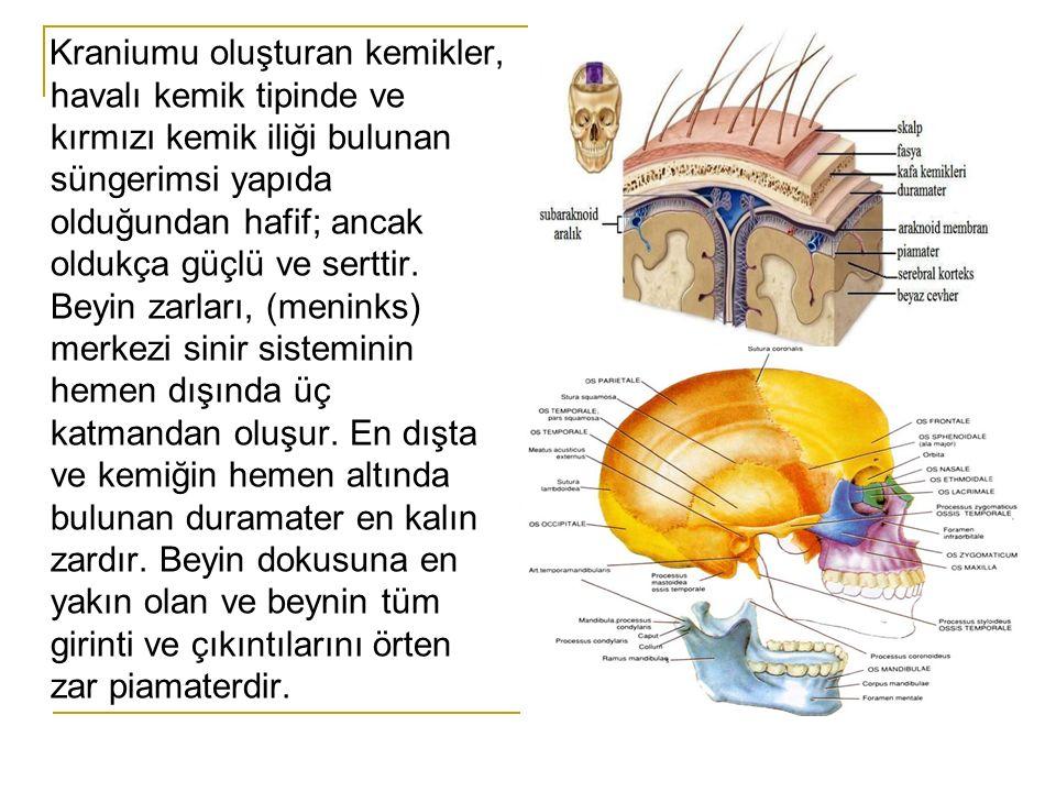 Göz Travmaları Göz, yedi adet kemikten oluşan orbitanın içine yerleşmiş kaş, göz kapağı ve kirpikler sayesinde anatomik olarak oldukça korunaklı yapıdadır.