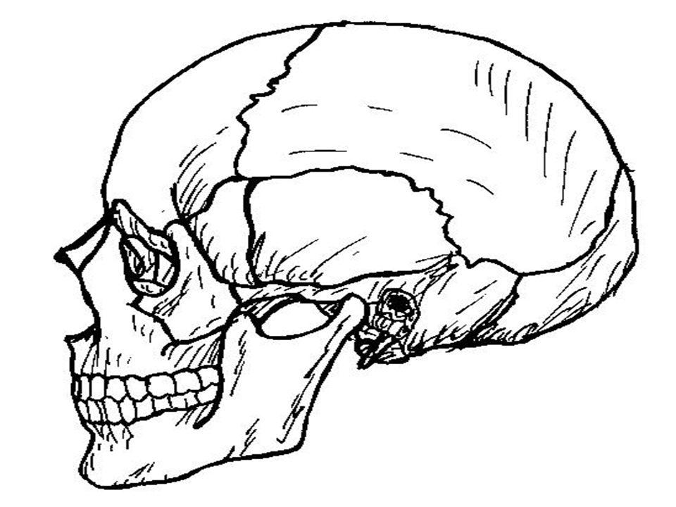 Kafatabanı (kaide) kırıkları Kafa tabanı kırıkları, kolay teşhis edilemez ve direkt belirti vermez.