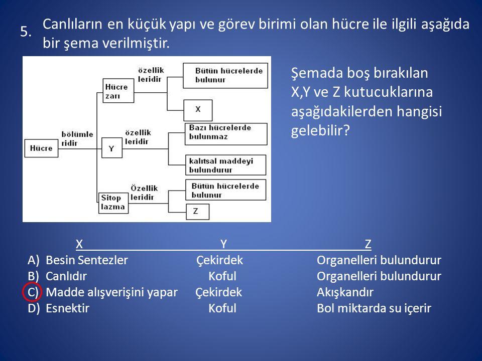 5. Canlıların en küçük yapı ve görev birimi olan hücre ile ilgili aşağıda bir şema verilmiştir.