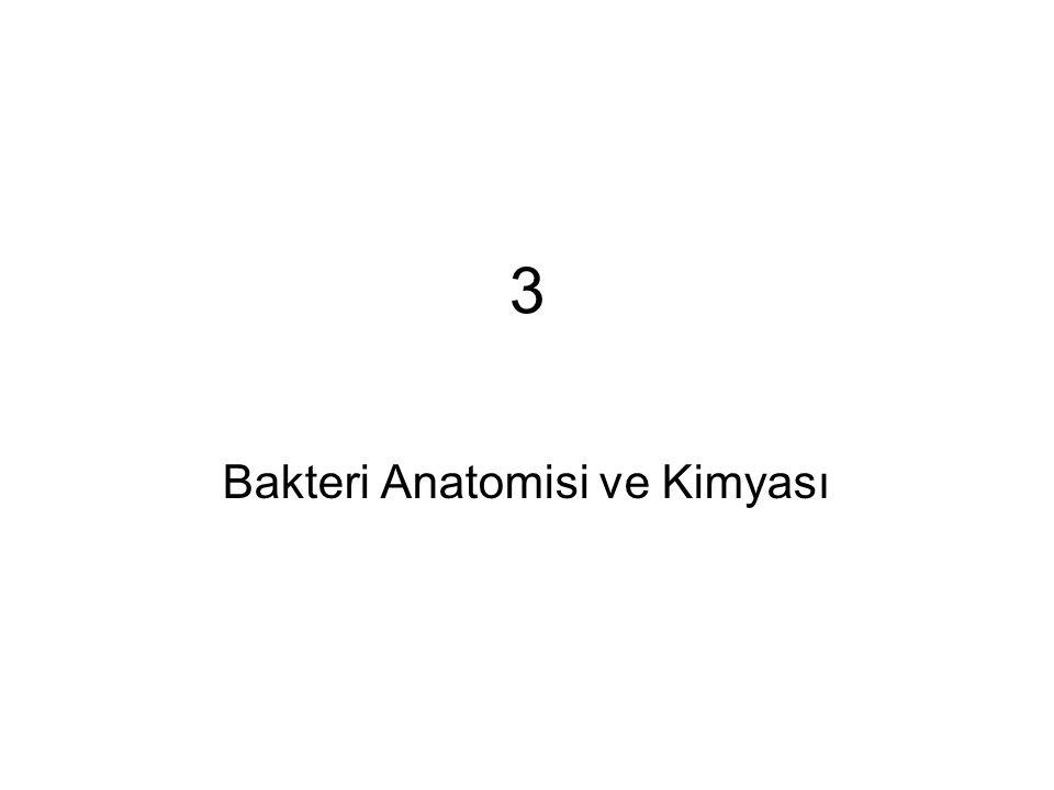 3 Bakteri Anatomisi ve Kimyası