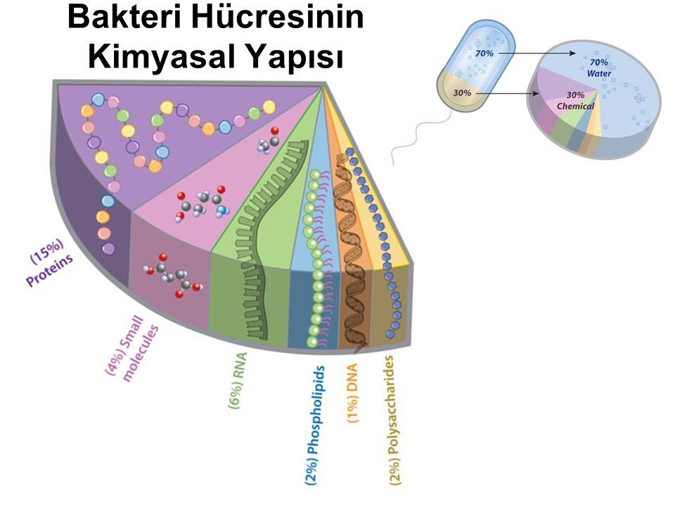 Bakteri Hücresinin Kimyasal Yapısı