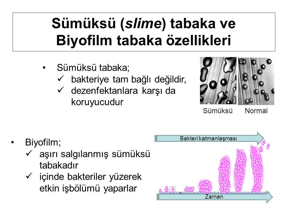 Sümüksü (slime) tabaka ve Biyofilm tabaka özellikleri Sümüksü tabaka; bakteriye tam bağlı değildir, dezenfektanlara karşı da koruyucudur Sümüksü Normal Biyofilm; aşırı salgılanmış sümüksü tabakadır içinde bakteriler yüzerek etkin işbölümü yaparlar Bakteri katmanlaşması Zaman