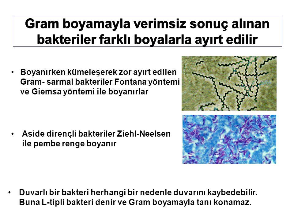 Boyanırken kümeleşerek zor ayırt edilen Gram- sarmal bakteriler Fontana yöntemi ve Giemsa yöntemi ile boyanırlar Aside dirençli bakteriler Ziehl-Neelsen ile pembe renge boyanır Duvarlı bir bakteri herhangi bir nedenle duvarını kaybedebilir.