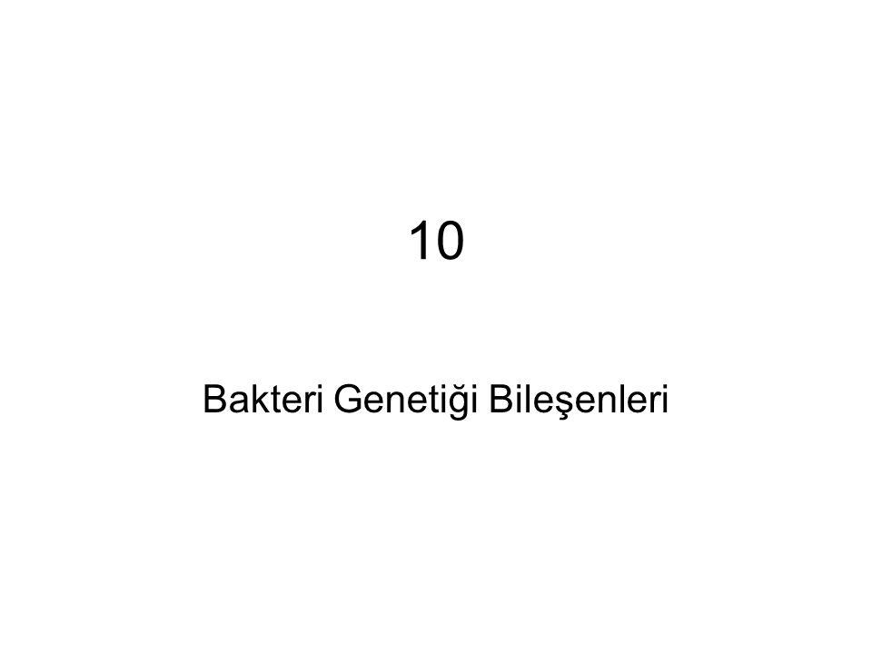 10 Bakteri Genetiği Bileşenleri