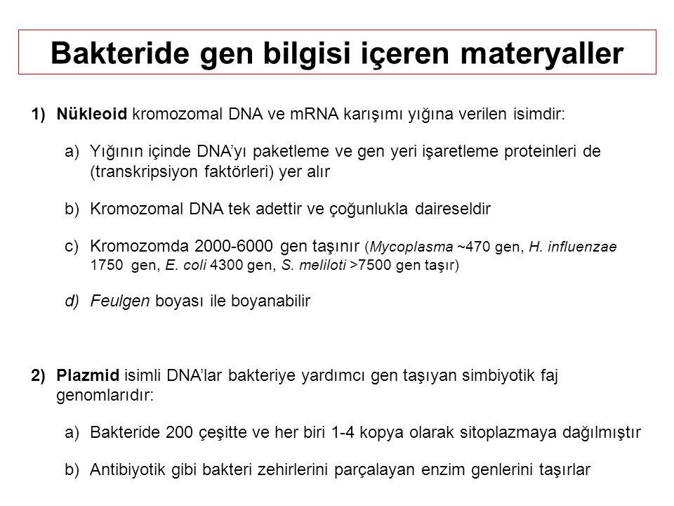 1)Nükleoid kromozomal DNA ve mRNA karışımı yığına verilen isimdir: a)Yığının içinde DNA'yı paketleme ve gen yeri işaretleme proteinleri de (transkripsiyon faktörleri) yer alır b)Kromozomal DNA tek adettir ve çoğunlukla daireseldir c)Kromozomda 2000-6000 gen taşınır (Mycoplasma ~470 gen, H.