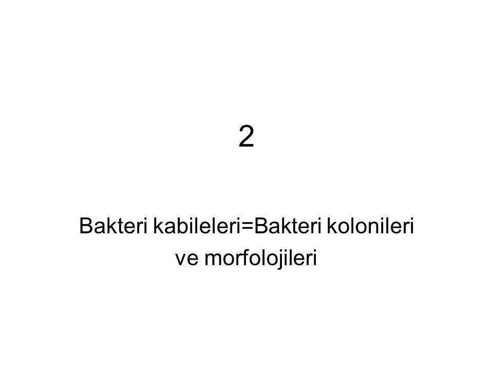 2 Bakteri kabileleri=Bakteri kolonileri ve morfolojileri