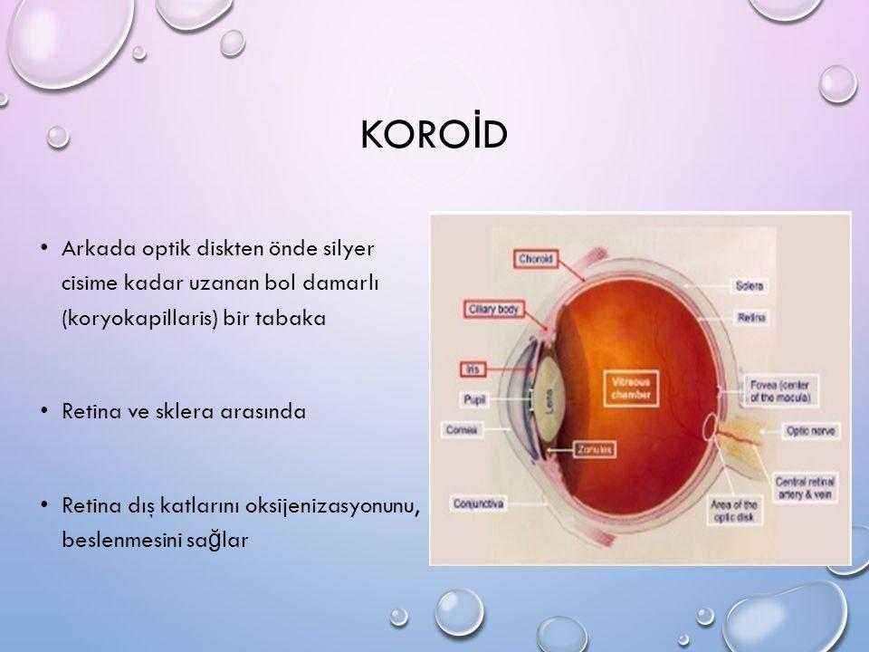 KORO İ D Arkada optik diskten önde silyer cisime kadar uzanan bol damarlı (koryokapillaris) bir tabaka Retina ve sklera arasında Retina dış katlarını