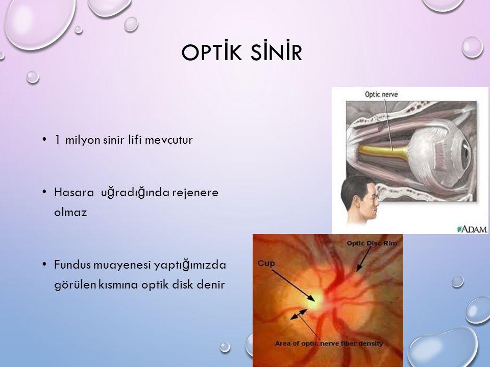 OPT İ K S İ N İ R 1 milyon sinir lifi mevcutur Hasara u ğ radı ğ ında rejenere olmaz Fundus muayenesi yaptı ğ ımızda görülen kısmına optik disk denir