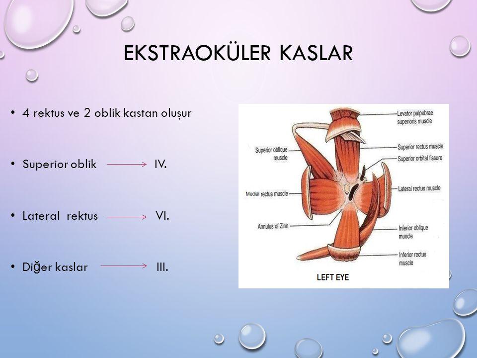 EKSTRAOKÜLER KASLAR 4 rektus ve 2 oblik kastan oluşur Superior oblik IV. Lateral rektus VI. Di ğ er kaslar III.
