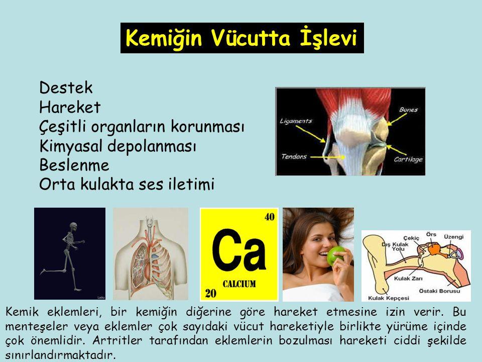 Destek Hareket Çeşitli organların korunması Kimyasal depolanması Beslenme Orta kulakta ses iletimi Kemiğin Vücutta İşlevi Kemik eklemleri, bir kemiğin