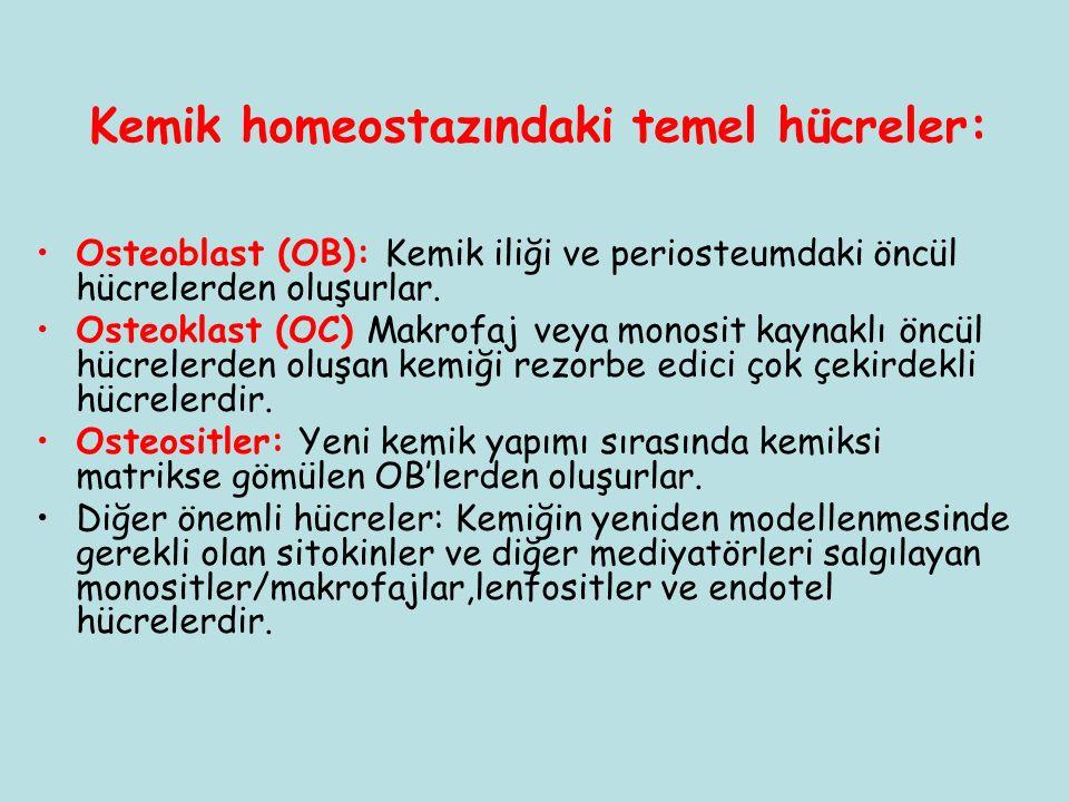 Kemik homeostazındaki temel hücreler: Osteoblast (OB): Kemik iliği ve periosteumdaki öncül hücrelerden oluşurlar. Osteoklast (OC) Makrofaj veya monosi
