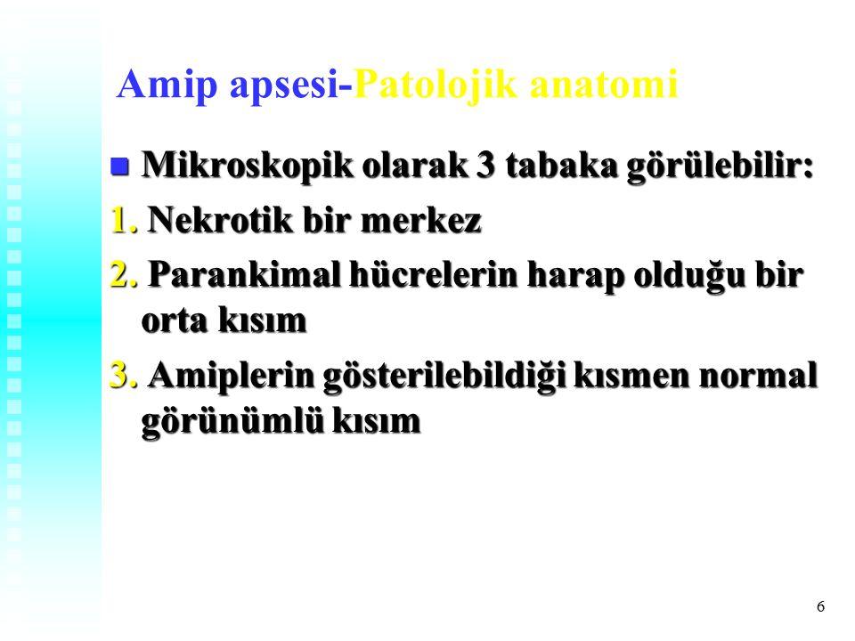 6 Amip apsesi-Patolojik anatomi Mikroskopik olarak 3 tabaka görülebilir: Mikroskopik olarak 3 tabaka görülebilir: 1.