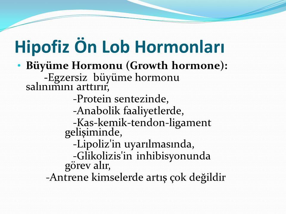Hipofiz Ön Lob Hormonları Büyüme Hormonu (Growth hormone): -Egzersiz büyüme hormonu salınımını arttırır, -Protein sentezinde, -Anabolik faaliyetlerde,