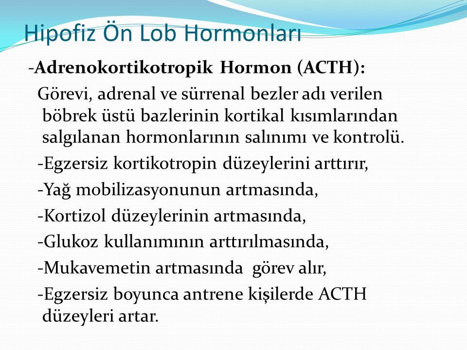 Hipofiz Ön Lob Hormonları -Adrenokortikotropik Hormon (ACTH): Görevi, adrenal ve sürrenal bezler adı verilen böbrek üstü bazlerinin kortikal kısımları