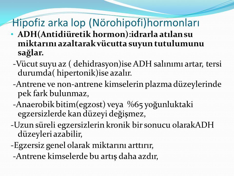 Hipofiz arka lop (Nörohipofi)hormonları ADH(Antidiüretik hormon):idrarla atılan su miktarını azaltarak vücutta suyun tutulumunu sağlar. -Vücut suyu az