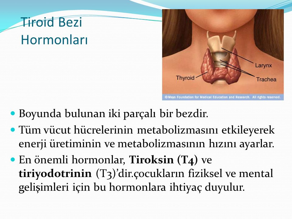 Tiroid Bezi Hormonları Boyunda bulunan iki parçalı bir bezdir. Tüm vücut hücrelerinin metabolizmasını etkileyerek enerji üretiminin ve metabolizmasını