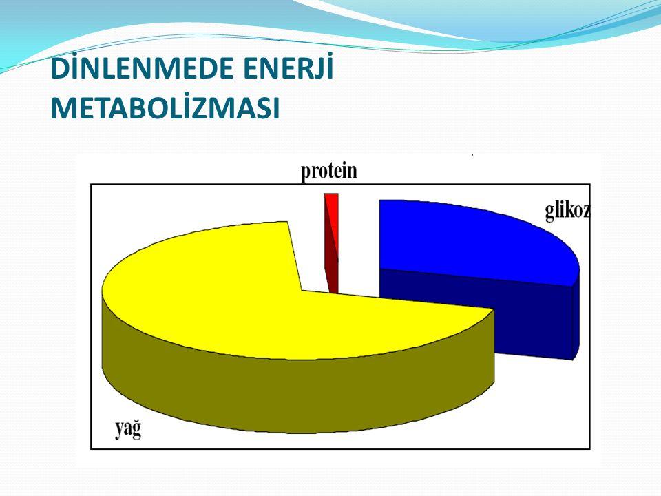 DİNLENMEDE ENERJİ METABOLİZMASI