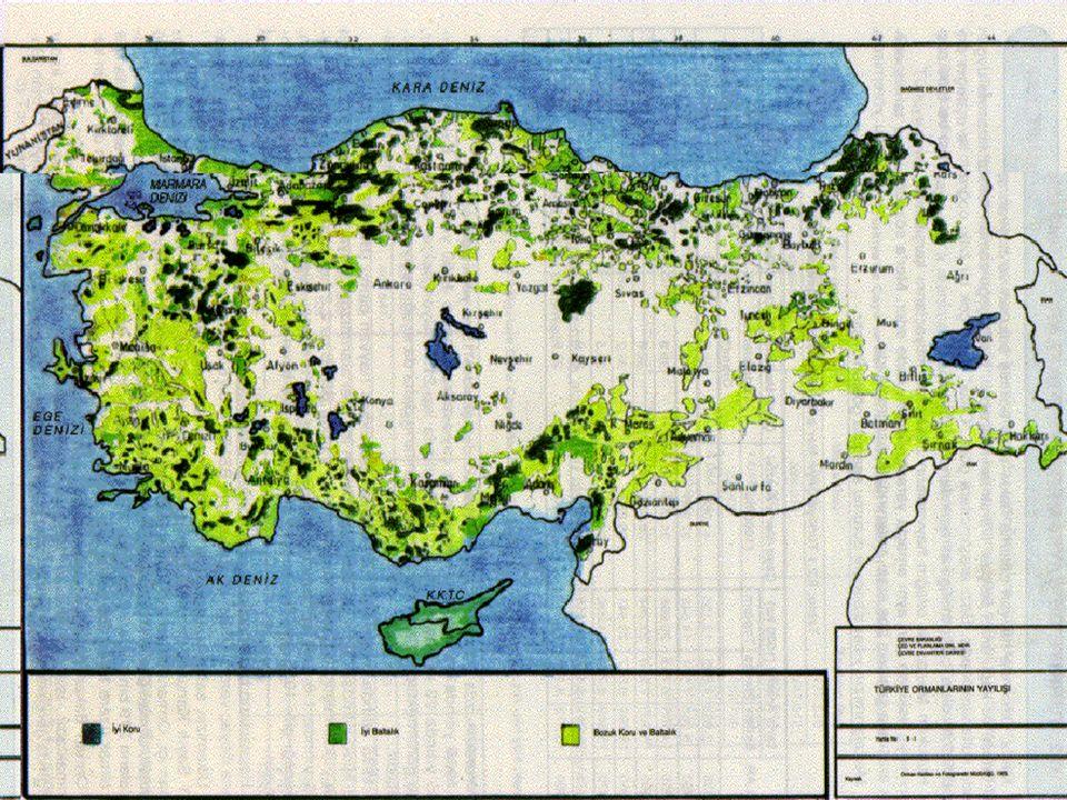 ORMANLAR: Ormanlar geniş yapraklı,iğne yapraklı, bazen de karışık orman gibi gruplara ayrılır.