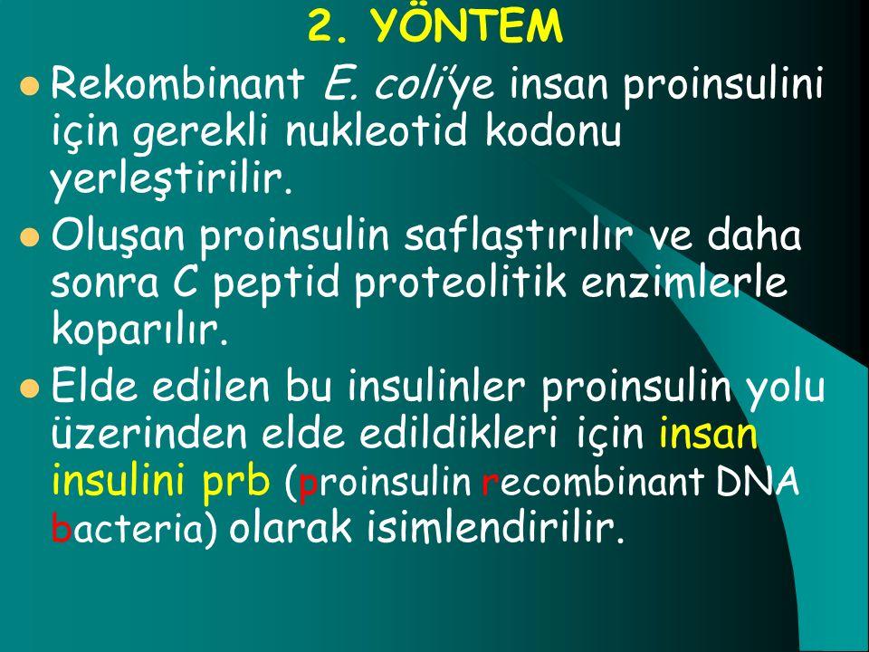 2. YÖNTEM Rekombinant E. coli'ye insan proinsulini için gerekli nukleotid kodonu yerleştirilir. Oluşan proinsulin saflaştırılır ve daha sonra C peptid