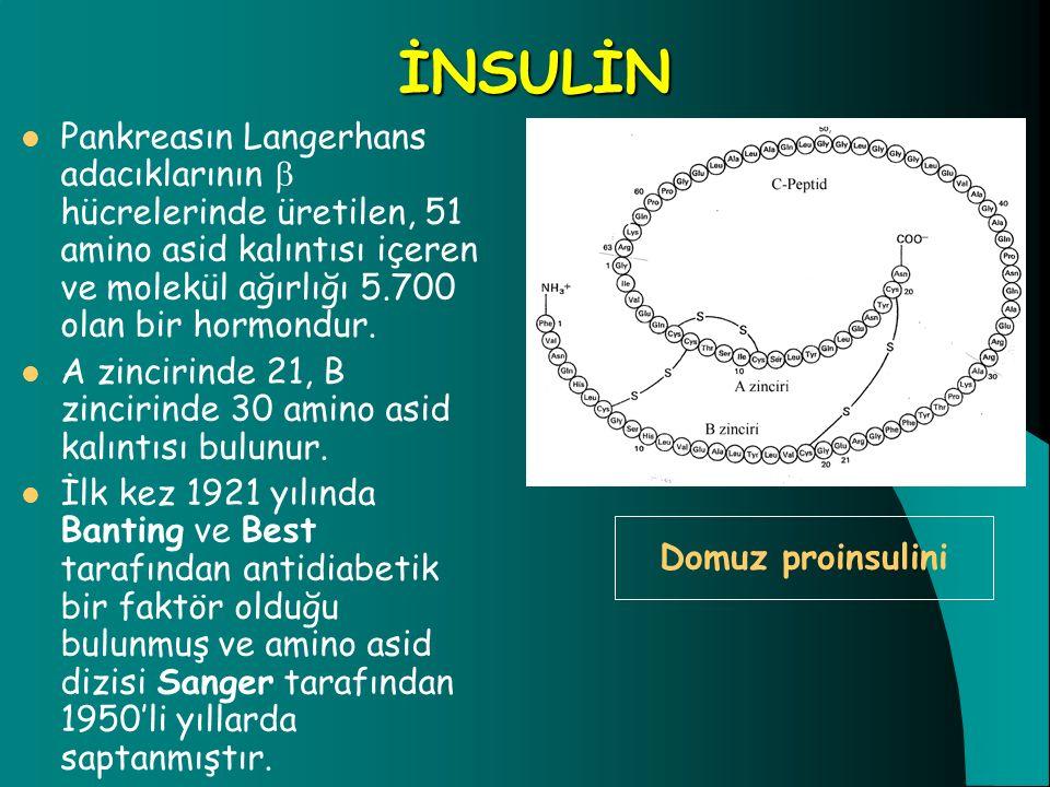İNSULİN Pankreasın Langerhans adacıklarının  hücrelerinde üretilen, 51 amino asid kalıntısı içeren ve molekül ağırlığı 5.700 olan bir hormondur. A zi