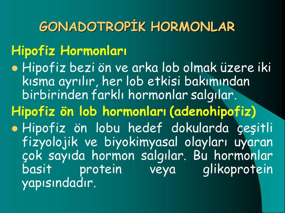 GONADOTROPİK HORMONLAR Hipofiz Hormonları Hipofiz bezi ön ve arka lob olmak üzere iki kısma ayrılır, her lob etkisi bakımından birbirinden farklı horm