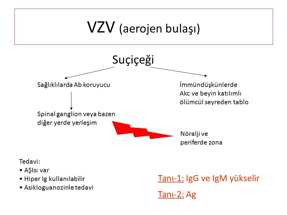 VZV (aerojen bulaşı) Suçiçeği Sağlıklılarda Ab koruyucuİmmündüşkünlerde Akc ve beyin katılımlı ölümcül seyreden tablo Spinal ganglion veya bazen diğer yerde yerleşim Nöralji ve periferde zona Tedavi: AŞIsı var Hiper Ig kullanılabilir Asikloguanozinle tedavi Tanı-1: IgG ve IgM yükselir Tanı-2: Ag