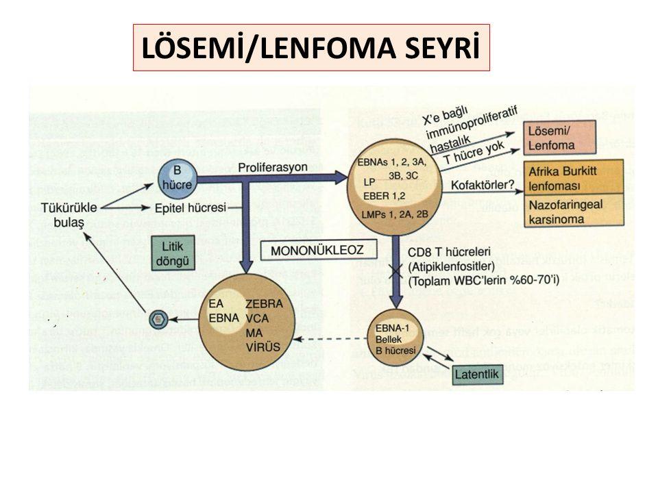 LÖSEMİ/LENFOMA SEYRİ