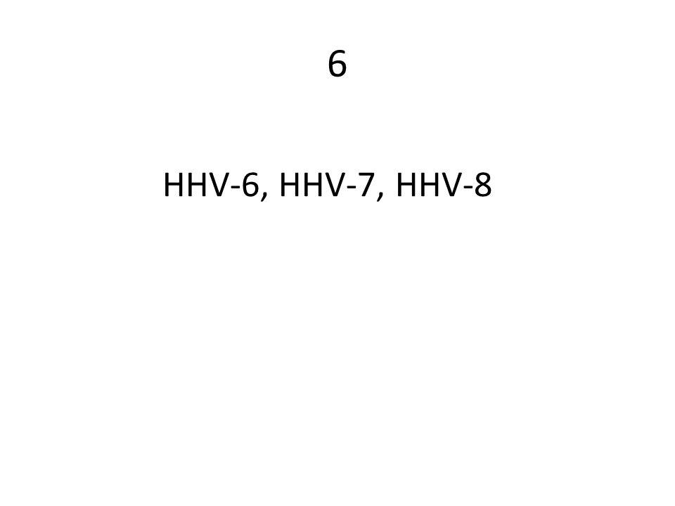 6 HHV-6, HHV-7, HHV-8