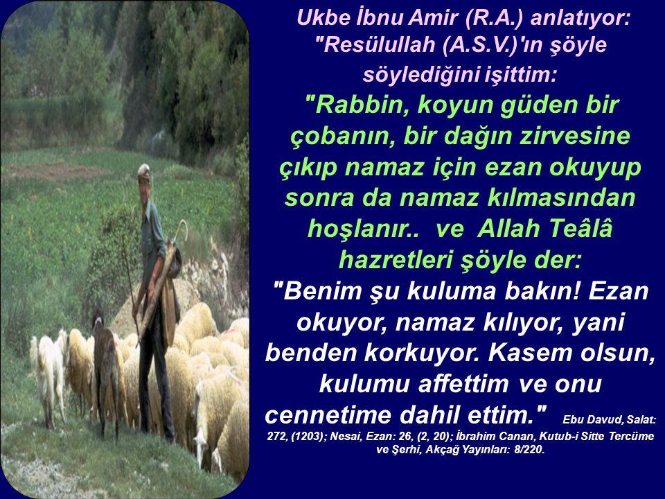 Ukbe İbnu Amir (R.A.) anlatıyor: Resülullah (A.S.V.) ın şöyle söylediğini işittim: Rabbin, koyun güden bir çobanın, bir dağın zirvesine çıkıp namaz için ezan okuyup sonra da namaz kılmasından hoşlanır..