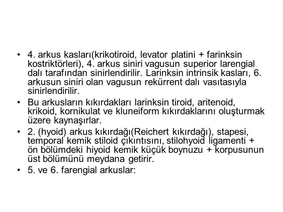 4. arkus kasları(krikotiroid, levator platini + farinksin kostriktörleri), 4.
