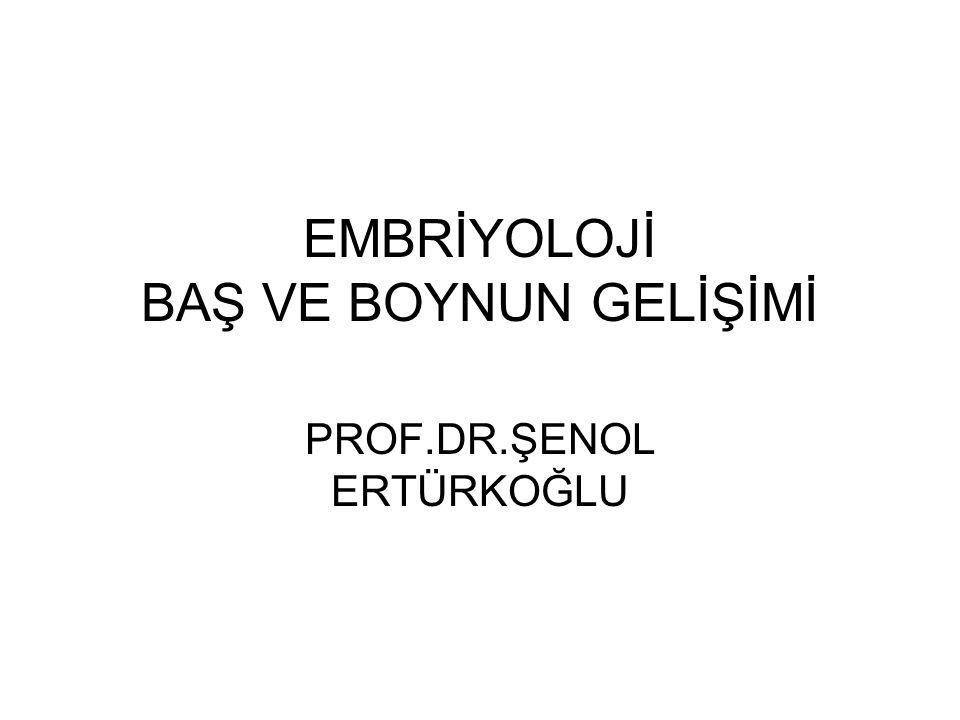 EMBRİYOLOJİ BAŞ VE BOYNUN GELİŞİMİ PROF.DR.ŞENOL ERTÜRKOĞLU