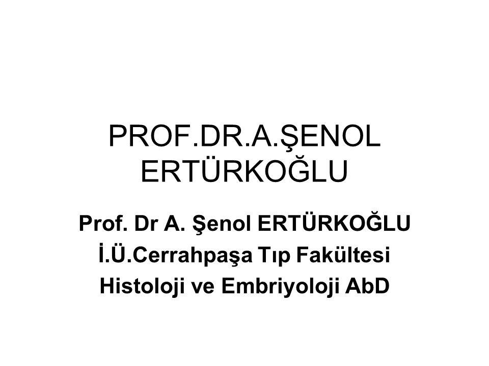 PROF.DR.A.ŞENOL ERTÜRKOĞLU Prof. Dr A.