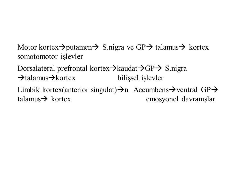 Motor kortex  putamen  S.nigra ve GP  talamus  kortex somotomotor işlevler Dorsalateral prefrontal kortex  kaudat  GP  S.nigra  talamus  kort