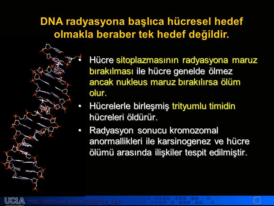 http://dmco.ucla.edu/McBride_Lab WMcB2008 DNA radyasyona başlıca hücresel hedef olmakla beraber tek hedef değildir.