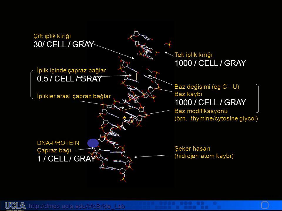 http://dmco.ucla.edu/McBride_Lab WMcB2008 Tek iplik kırığı 1000 / CELL / GRAY Baz değişimi (eg C - U) Baz kaybı 1000 / CELL / GRAY Baz modifikasyonu (örn.