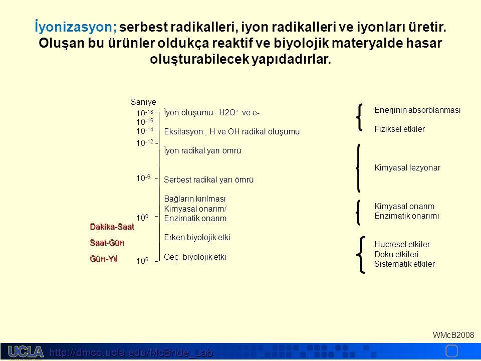 http://dmco.ucla.edu/McBride_Lab WMcB2008 Radyasyonun direkt ve dolaylı interaksiyonu İyonize edici radyasyon biyolojik hedeflerle doğrudan ya da dolaylı olarak interaksiyona girebilir.İyonize edici radyasyon biyolojik hedeflerle doğrudan ya da dolaylı olarak interaksiyona girebilir.