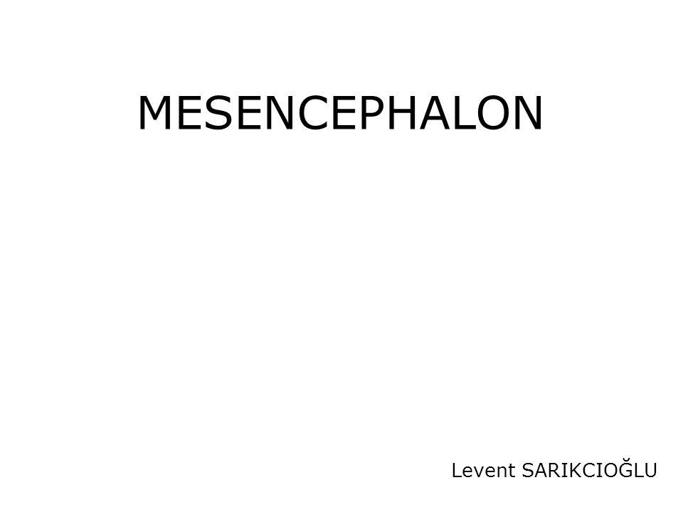 Beyin sapının üst bölümünü oluşturur Beyin sapı Mesencephalon (Midbrain) Pons (Metencephalon) Bulbus (Myelencephalon)