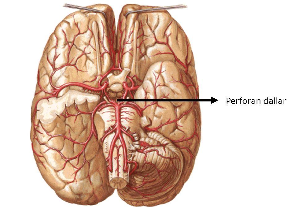Nucleus colliculi superioris Colliculus superior adı verilen kabartının derininde bulunur Görme refleks merkezidir Colliculus superior seviyesinden geçen kesit