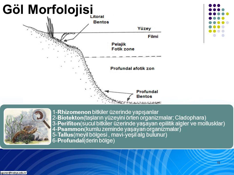 18 1-Rhizomenon bitkiler üzerinde yapışanlar 2-Biotekton(taşların yüzeyini örten organizmalar; Cladophara) 3-Perifiton(sucul bitkiler üzerinde yaşayan epilitik algler ve mollusklar) 4-Psammon(kumlu zeminde yaşayan organizmalar) 5-Tallus(meyil bölgesi, mavi-yeşil alg bulunur) 6-Profundal(derin bölge) Göl Morfolojisi