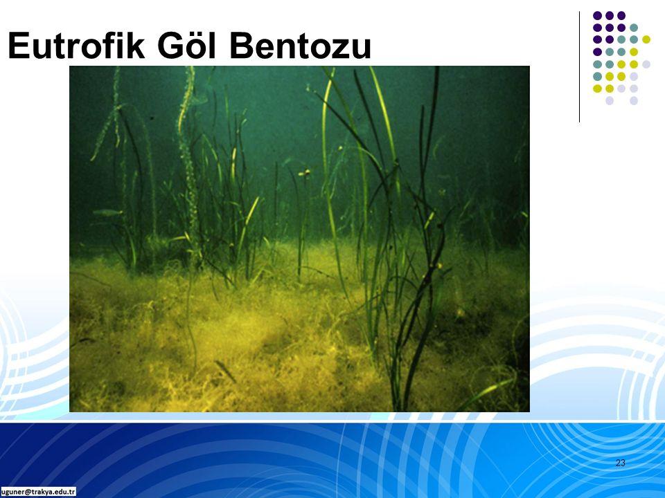 23 Eutrofik Göl Bentozu