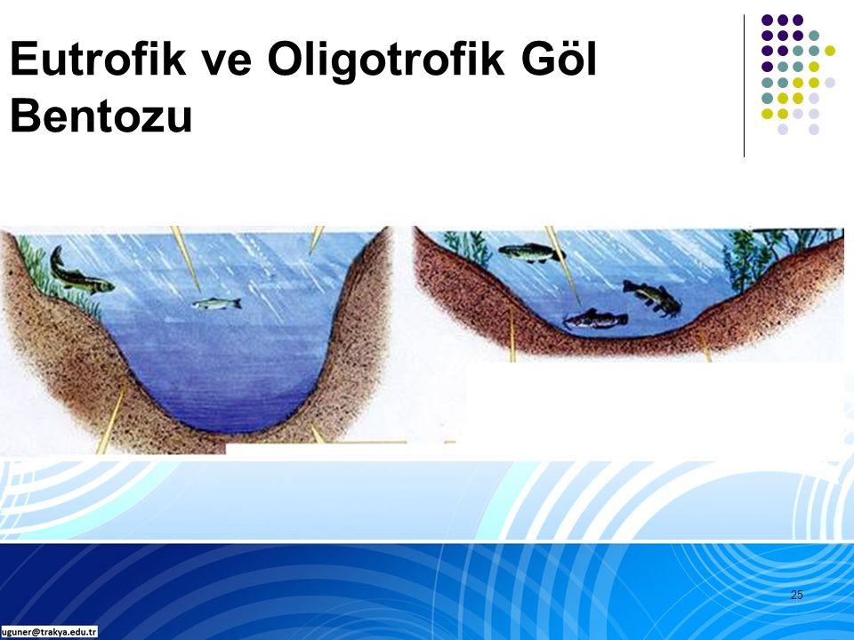 25 Eutrofik ve Oligotrofik Göl Bentozu