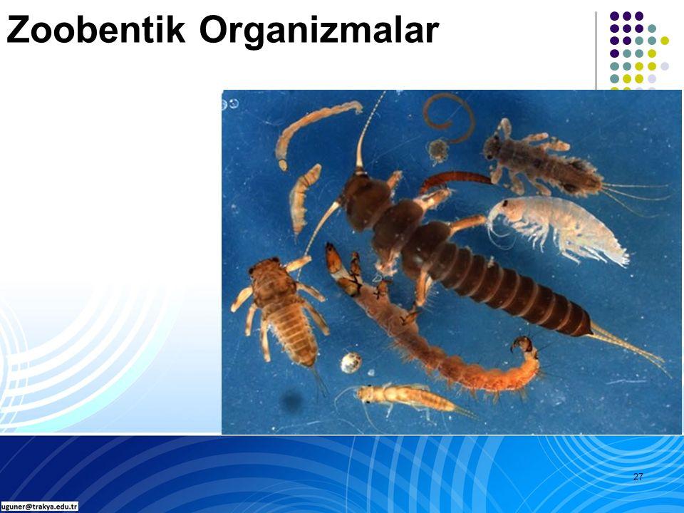 27 Zoobentik Organizmalar