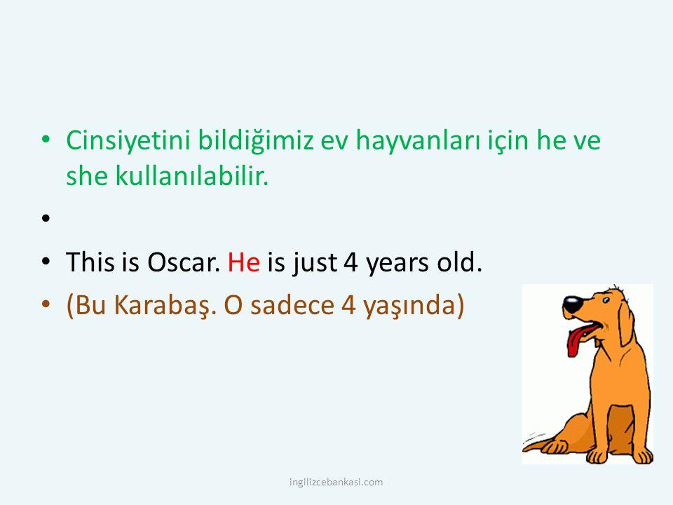 Cinsiyetini bildiğimiz ev hayvanları için he ve she kullanılabilir. This is Oscar. He is just 4 years old. (Bu Karabaş. O sadece 4 yaşında) ingilizceb